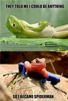 The herpetologist in me HATES this because the first picture is a FROG and the second is a lizard. It is a georgous, and very Spidey-like Mwanza Flat Headed Agama lizard . Frogs = amphibians. Lizards = reptiles. You can be anything when you grow up.... but you can't switch class and species!!!