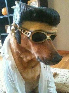 Adog dressed like Elvis pressly