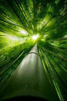 """El bambú es la planta más popular en China, ya que todos los pueblos del sur de China están rodeados de bosques de bambú, por lo cual para cualquier chino estar cerca de un bambú, es estar cerca de casa. ....las hojas caídas de bambú se cruzan entre sí y generan la forma del carácter chino """"An"""" o """"tranquilidad"""".  En el arte chino del Feng Shui, cuando se coloca una planta en la maceta correcta, se dice que se debe introducir fuego y metal, para completar un balance de los cinco"""