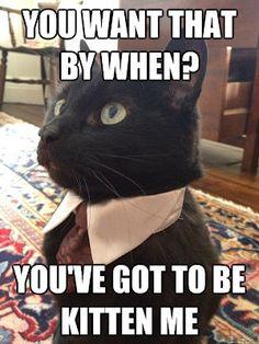 You've gotta be kittin me.