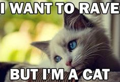 Kitties Want to Rave Too.