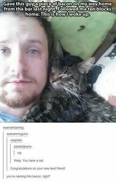 Cat Memes Of The Day 32 Pics – - Lovely Animals World Cat has human trained 35 Purrrrfect Cat Memes For Your Caturday Enjoyment - Memebase - Funny Memes Join our group: Happy Cats Thurs. Cute Funny Animals, Funny Animal Pictures, Funny Cute, Cute Cats, Hilarious, Funny Images, Funny Pics, Random Pictures, Videos Funny