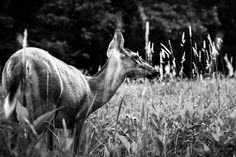 [Photo Tips] Nature + Wildlife Photography Tips for Beginners #photography #phototips #wildlife