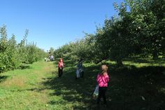 Columbus Day Trip to Maskers Orchard  What a fab day we had at the Apple Orchard. Read about our day!