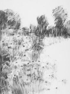 Hannah Woodman, 'Summer Borderm Kestle Barton Garden' Graphite on paper 77 x 57 cm