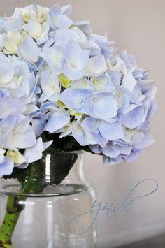 My Hydrangea in a Tine K vase Magnolia Plantation, Hydrangeas, Vases, Glass Vase, Decor Ideas, Lights, Bedroom, Home Decor, Jars
