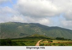 Biligirirangana Hills is a picturesque hill retreat that treats its tourists with some of the wonderful locales. To explore more visit the page. #hillstation #mysore #karnataka #travel #tourism