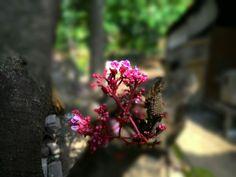 Bunga belimbing