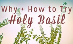 Holy Basil: Health Benefits of Tulsi and How to Use It | Care2 Healthy Living