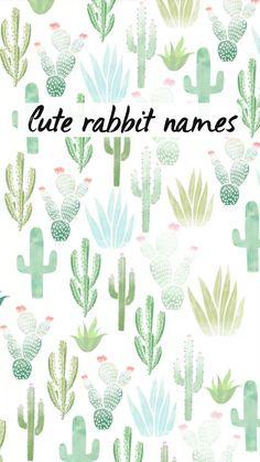 Cute rabbit names