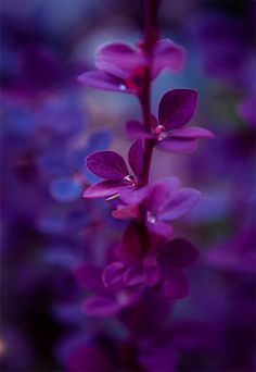 Purple Flowers by Andrey Lugovoy on Exotic Flowers, Amazing Flowers, Purple Flowers, Beautiful Flowers, Purple Love, All Things Purple, Shades Of Purple, Flower Wallpaper, Nature Wallpaper