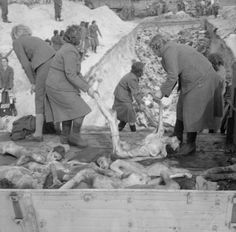 Female SS camp guards remove bodies from lorries and carry them to a mass grave, inside the German Bergen-Belsen concentration camp, 1945