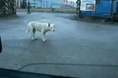 This dog who bumped it pretty hard in his imaginary club.