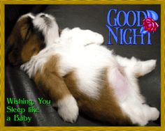 Puppy Wishes You Good Night.