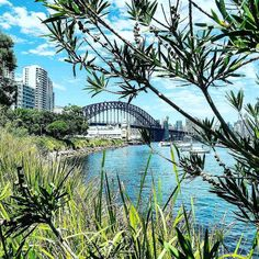 Last one from today. I need to have lunch in this spot more often!  #Sydney #harbour #sydneyharbour #water #boats #lavenderbay #milsonspoint #northshore #northsydney #sydneyharbourbridge #harbourbridge #bridge #lunchtime #walk by dlotters http://ift.tt/1NRMbNv
