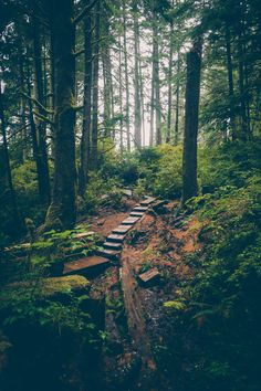 Forest Path, British Columbia