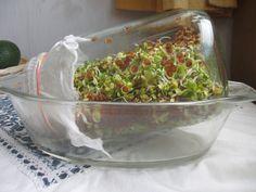 Apró szemű magok csíráztatása befőttes üvegben - etkajoga-miskolc.honlapepito.hu Guacamole, Paleo, Mexican, Cooking, Healthy, Ethnic Recipes, Food, Garden, Kitchen