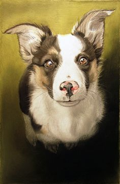 Dog art by Amy Little,  Lavinia, 2013,  Pastel pencil on paper