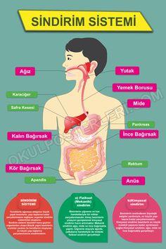 Learn Turkish, Fourth Grade, Human Body, Biology, Homeschool, Knowledge, Language, Student, Science