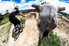 #bike #photography #Desert #Extrem #campo #race #day #animals #bicicletas #deportes #dh #sunday #Ecuador #capital #sports #Face #steck #cow http://tipsrazzi.com/ipost/1516136158165056756/?code=BUKZc2Sjbz0