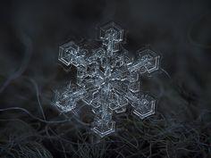 Snowflakes - Alexey Kljatov
