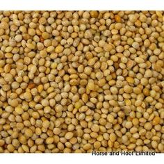 Versele Laga Yellow Millet Seeds For Caged Birds 25kg Versele Laga Milletseed Yellow Seeds are suitable for all types of caged birds.