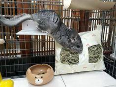 Fleece Chinnycorn Hay Bag for Chinchilla, Rabbit, Guinea pig Chinchilla Toys, Feather Lamp, Pet Bag, Like Animals, Bird Toys, Animal House, Apollo, Fur Babies, Zelda