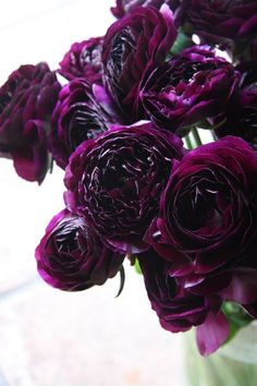 Sultry Dark Floral Wedding Ideas to Spice Things Up Love dark colored flowers. The post Sultry Dark Floral Wedding Ideas to Spice Things Up appeared first on Diy Flowers. Black Peony, Black Flowers, Beautiful Flowers, Plum Flowers, Exotic Flowers, Romantic Flowers, Beautiful Gorgeous, Diy Flowers, Dark Purple Wedding