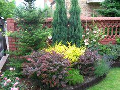 – Gardening Tips Backyard Garden Landscape, Privacy Landscaping, Small Backyard Landscaping, House Landscape, Garden Landscape Design, Evergreen Garden, Evergreen Landscape, Garden Design Plans, Small Garden Design