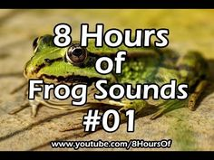 8 Hours of relaxing frog sounds. If you listen to this during sleep or meditation you will feel peaceful and calm. Great for tinnitus, meditation, yoga, when you study, go to sleep, have insomnia or have sleep deprivation.  Please like, subscribe and comment if you enjoyed this video. It will really help me out a lot. :)  http://www.youtube.com/subscription_center?add_user=8hoursof