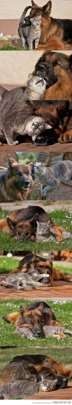 The best of friends…