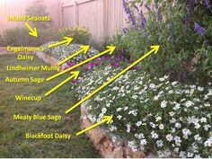 Some native Texas plants. Heat and drought tolerant, which means low maintenance!