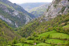 """En Caleao. Asturias """"como no va a estar buena"""" la carne de Asturias con estos pastos."""