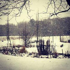 Vinter i haven i det Vestjyske