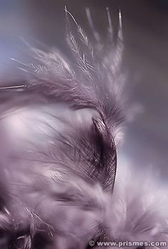 Feathers by Sophie Thouvenin