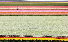 Tulip Fields of the Netherlands | 21 Most Colorful And Vibrant Places In The World