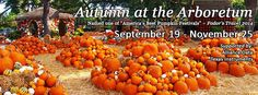 Dallas Arboretum, Best Pumpkin, The Crown, Garden, Outdoor, Outdoors, Garten, Lawn And Garden, Gardens