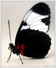 black and white...striking!