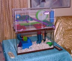 1000 images about gerbils on pinterest gerbil hamster for Cat proof fish tank