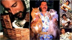 CAT MUSHU - Google+