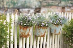 Rusty Pails on Picket Fence great on my someday garden fence. Blue Fescue, White Picket Fence, Picket Fences, Picket Fence Decor, Picket Fence Garden, White Fence, Pool Fence, Garden Cottage, My Secret Garden