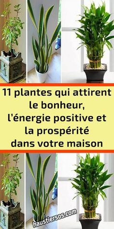 Plantes Feng Shui, Outdoor Garden Rooms, Crassula, Decoration Plante, Plant Therapy, Home Organisation, Rose Bouquet, Horticulture, Good To Know
