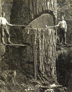 Two lumberjacks and a big tree, Pacific Northwest, 1915 via Historical Pictures Vintage Pictures, Old Pictures, Old Photos, Random Pictures, Rare Photos, Vintage Images, Design Visual, Foto Real, Big Tree