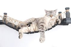 The Cat Mod - Wall-mounted Wooden Cat Bridge for Cats to Play and Lounge : Amazon.com (affiliate link)