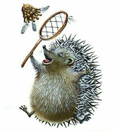 As far as pets go, it is the African pygmy hedgehog that is the most popular. These hedgehogs have a lifespan of around. Pygmy Hedgehog, Hedgehog Art, Hedgehog Illustration, Cute Illustration, When Do Hedgehogs Hibernate, Hedgehog Habitat, Animal Facts, Creature Feature, Badminton