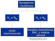 receptores nicotinicos y muscarinicos - Buscar con Google