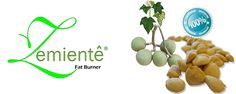 Zemiente Fat Burner, Place Cards, Seeds, Place Card Holders, Fruit, Vegetables, Fat Burning, Vegetable Recipes, Veggies