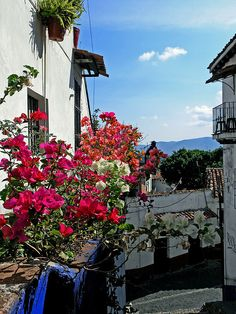 Beautiful Scenery in Taxco, Mexico | boughanvillea in Taxco | Flickr - Photo Sharing!