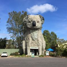 Passed the giant koala on the way home #weekendtrip