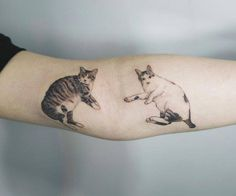 Cat tattoos on the arm.